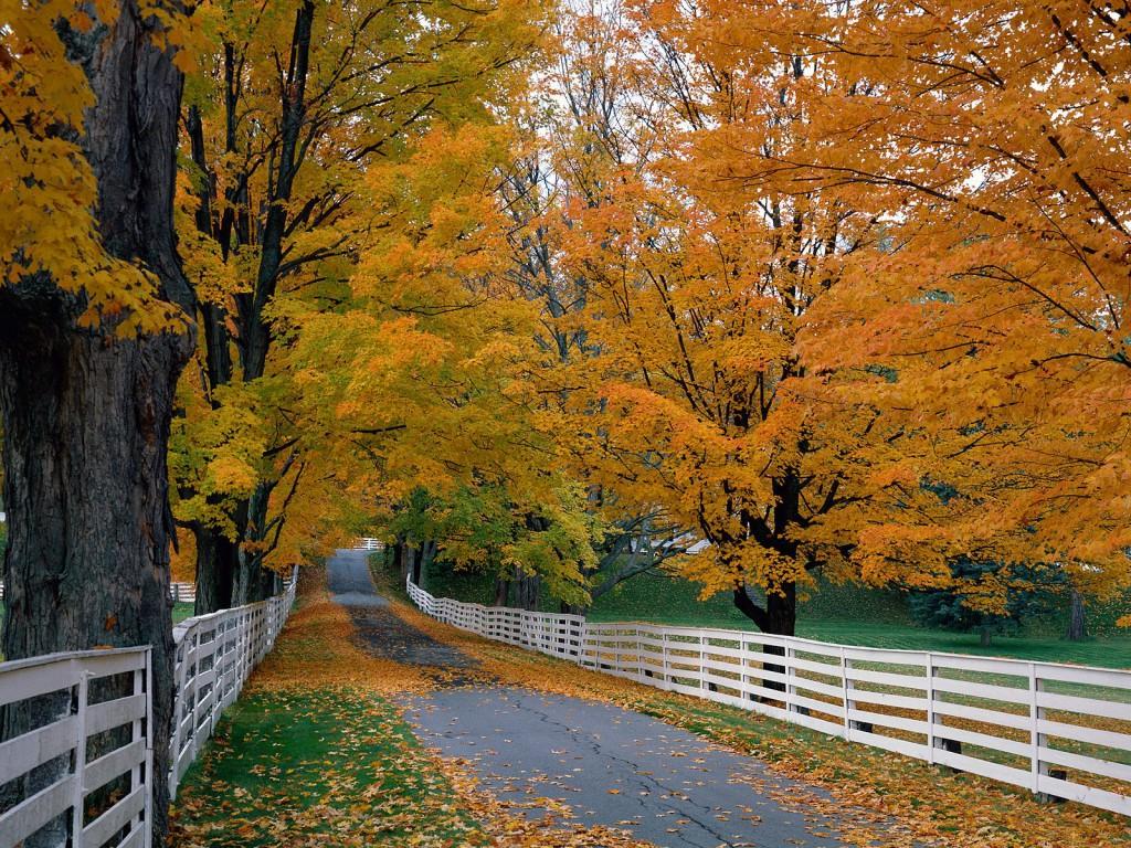 Scenic Backroad, New Hampshire